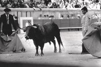 bullfighting - nîmes, france