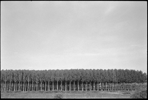 pine forest outside berlin