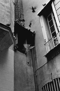 pigeons, montpellier, france