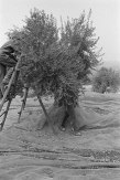 miguel torres olive groves, spain/barclays bank